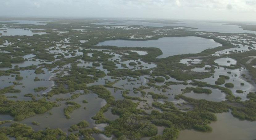 Proteger manglares puede ahorrarnos millones dólares al año inundaciones