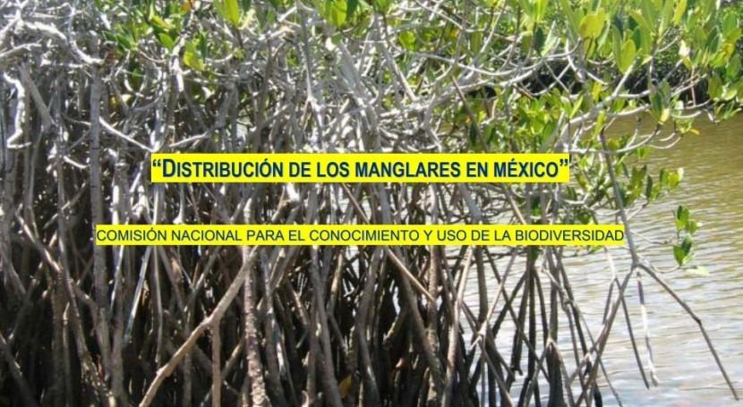 mayor conocimiento manglares México