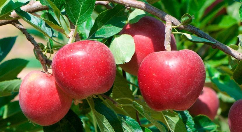 sistema riego basado Internet cosas reduce agua cultivo manzana