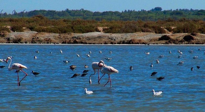 humedales costeros, grandes sumideros carbono