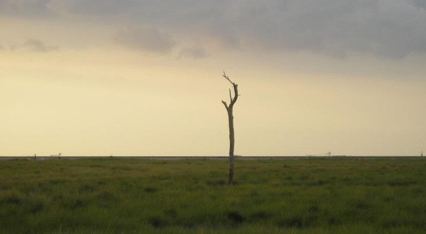 actividad humana modifica capacidad Doñana como secuestrador CO2