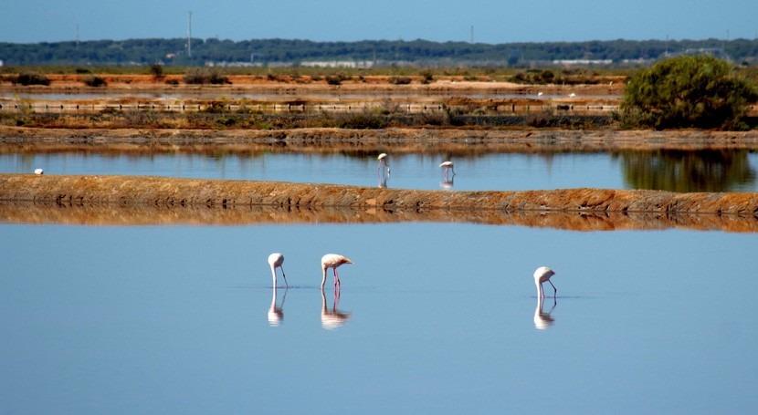 Andalucía celebra nidificación 35.000 parejas aves acuáticas 132 humedales