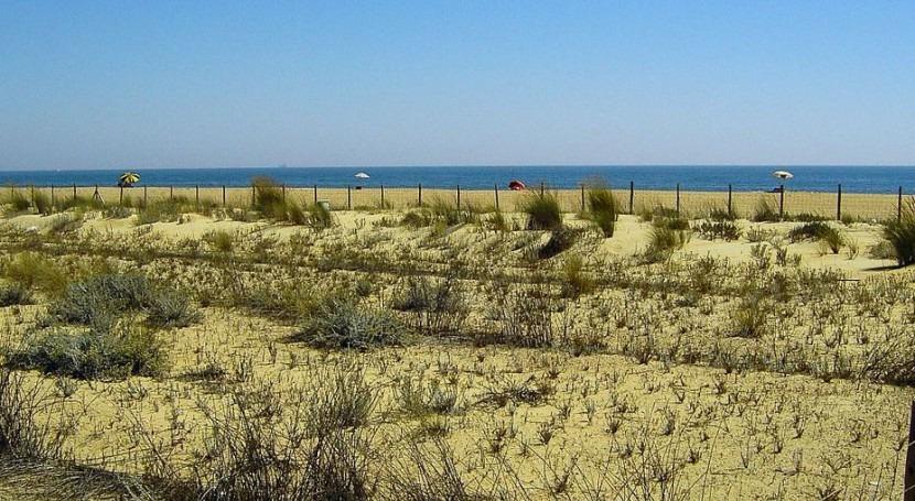 Iniciados trabajos control planta invasora onagra costera Marismas Odiel