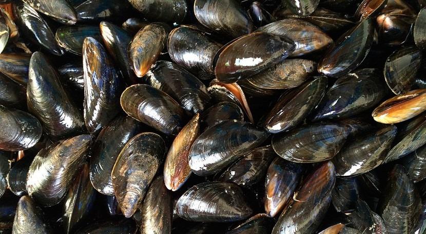 ¿Cómo influye acidificación océanos mejillones?