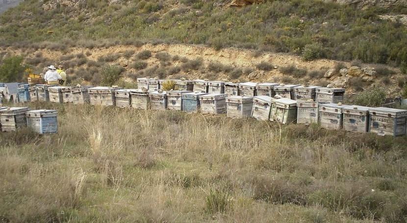 sequía reduce 60% producción miel Ibiza