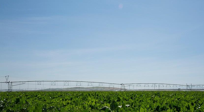 MITECO otorga regantes Guadalquivir concesión riego 15.085 hectáreas