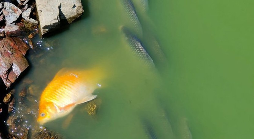 CHG investiga causas mortandad peces embalse Vicario