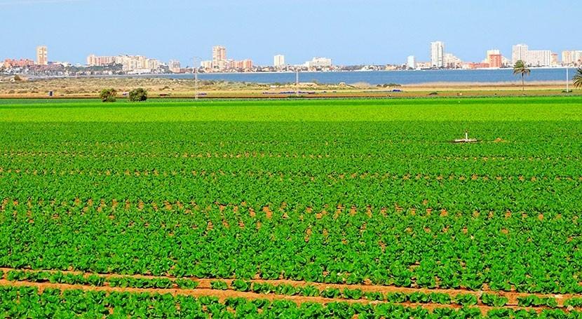 Murcia busca forma mejorar eficiencia riego Campo Cartagena