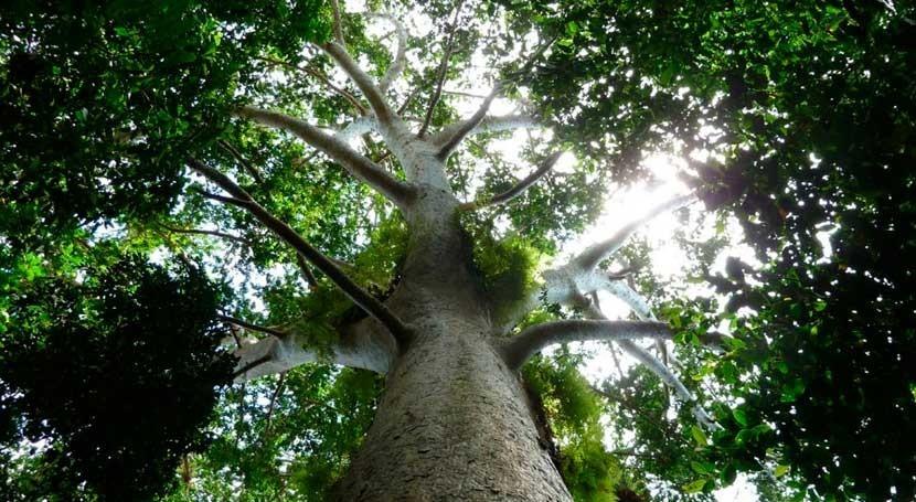 Nicaragua se adhiere al Acuerdo París Cambio Climático