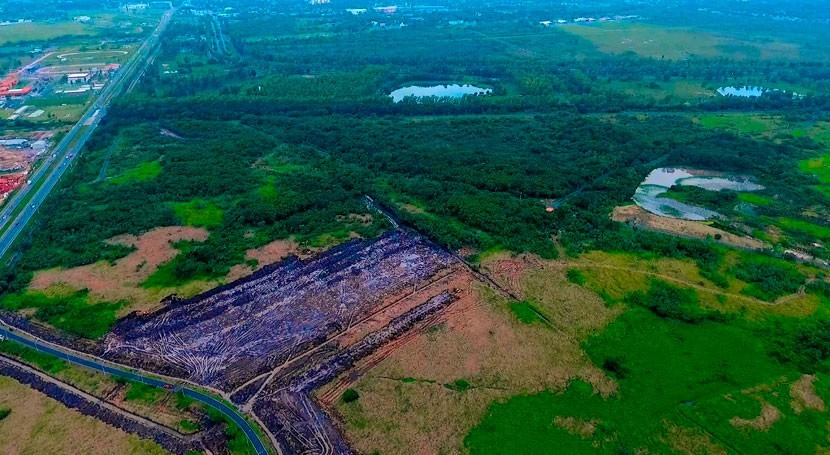 Parque Guasú: Gobierno Paraguay ampliará área forestal plantando 10.000 árboles