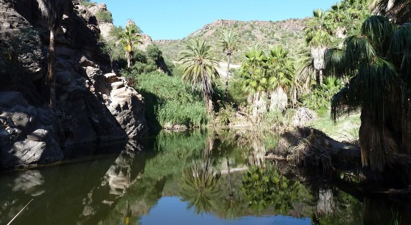 Oasis sudcalifornianos, sistemas socioambientales únicos