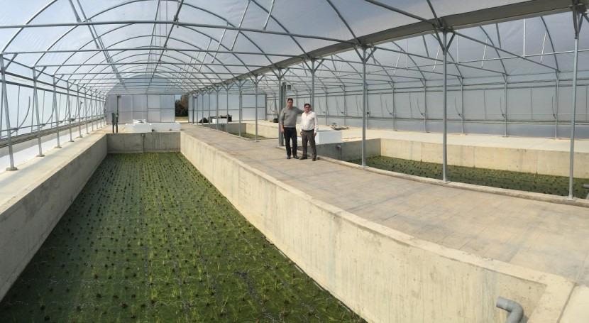 OGESA holding, liderazgo conocimiento e innovación depuración natural agua
