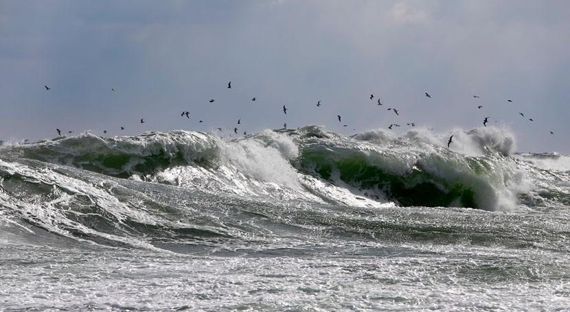 calentamiento océanos hace aumentar olas calor marinas último siglo