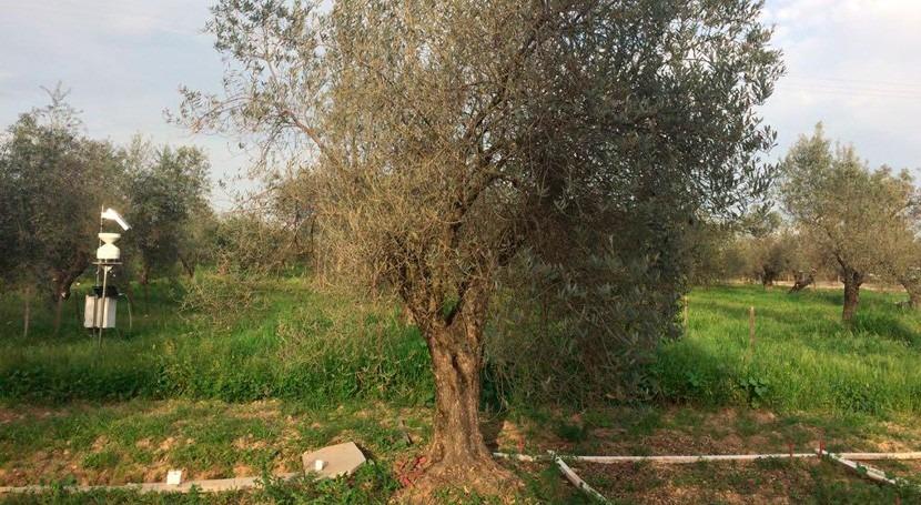 investigación aplica corrientes eléctricas medir humedad suelo olivar
