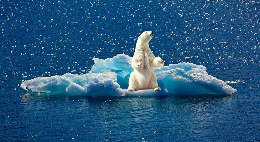 cambio climático disminuye nivel mercurio osos polares
