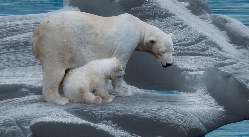extensión hielo marino Ártico alcanza reducciones históricas