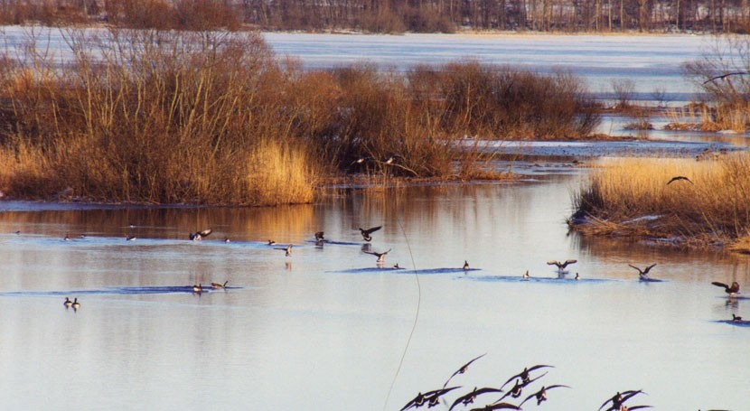 Suecia actualiza y amplía humedales Ramsar