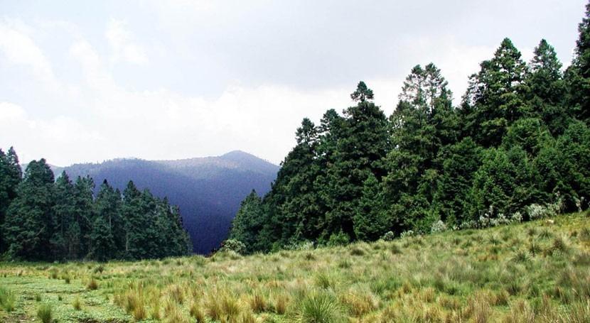 estudio variación genética oyameles, árboles vitales reservas agua México