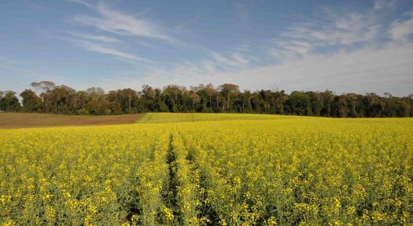 paisajes agrícolas están poco representados toma medidas conservación