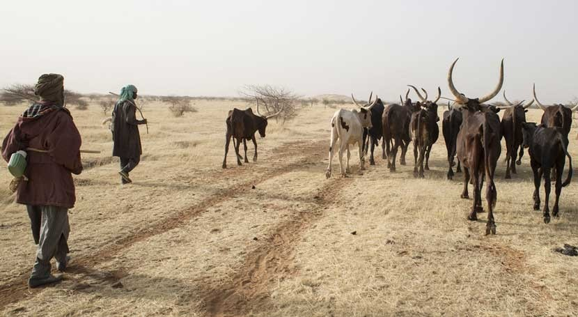 pastores Sahel depositan confianza teléfonos móviles encontrar agua
