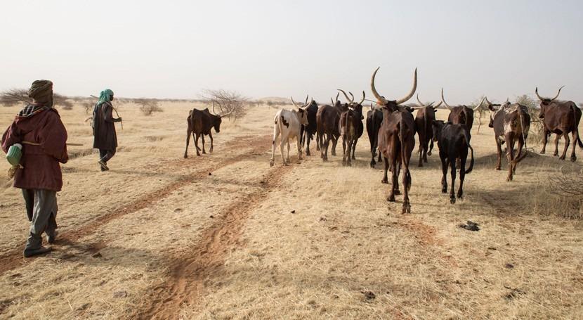 clima y conflictos hacen que más países necesiten ayuda alimentaria externa