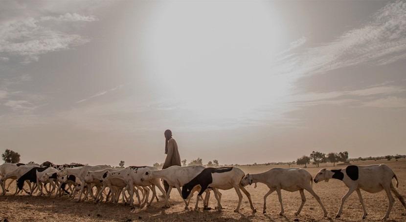 Donde cambio climático es realidad: dar pastores Sahel futuro resiliente