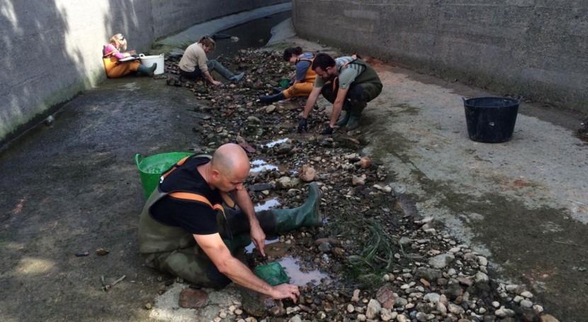 Comienza campaña rescate peces red riego Delta Ebro