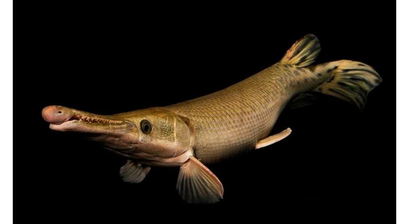 sobreexplotación hace desparecer fauna agua dulce todo mundo
