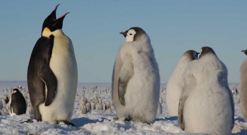 cambio climático y sobrepesca krill amenzan pingüinos Antártida