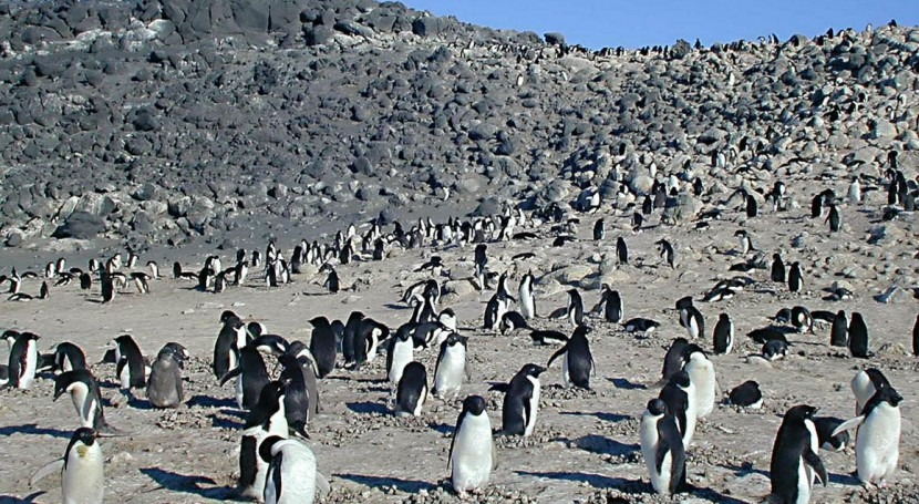 deshielo Antártida aumenta población pingüinos Adelaida