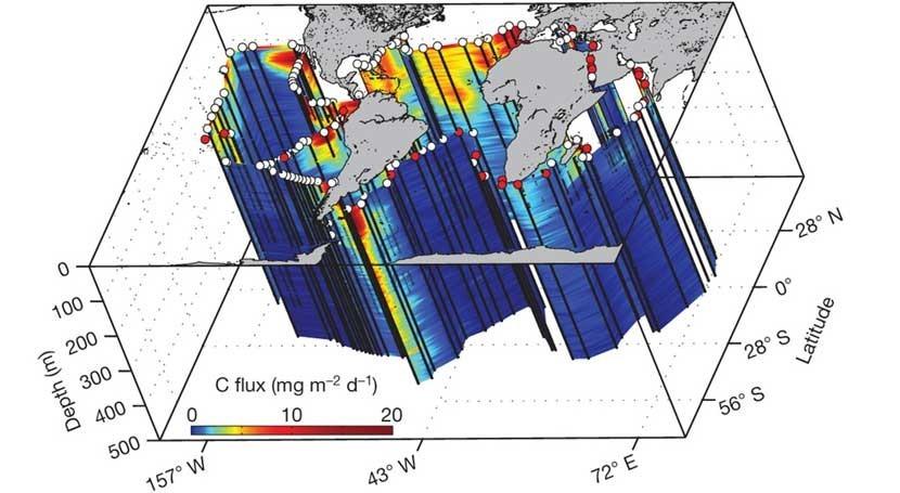 plancton juega papel fundamental regulación sistema climático Tierra