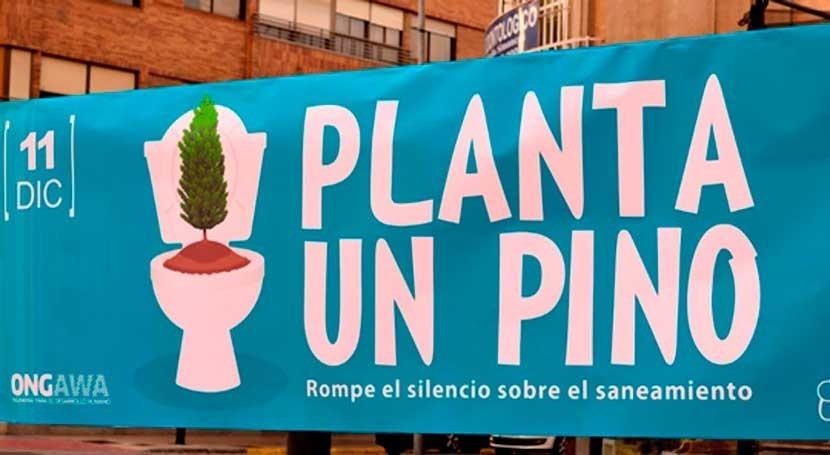 Plantar pino