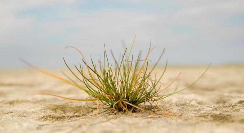 ¿Cómo se adaptan plantas condiciones cambio climático?