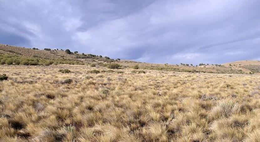 distribución plantas ecosistemas áridos, indicador cambio climático