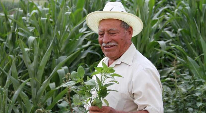Seguro índice climático: póliza que protege campesinos mexicanos cambio climático