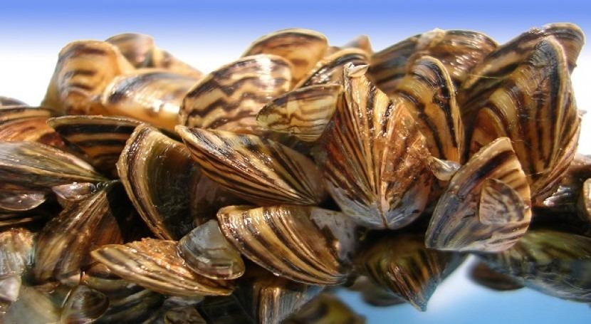 Tratamientos biológicos. Control invasiones moluscos bivalvos