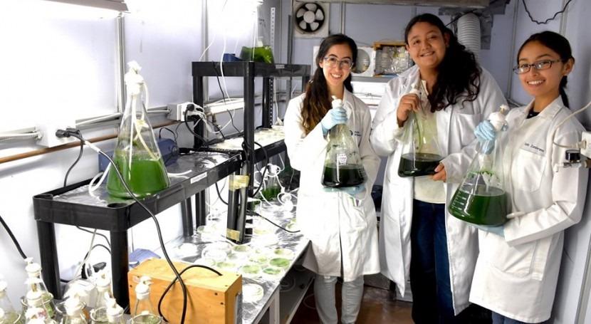 residuos industria porcina y maíz se pueden mezclar cultivar microalgas: CdA