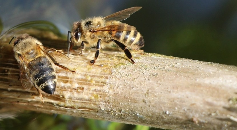 abejas, grandes aliadas agua