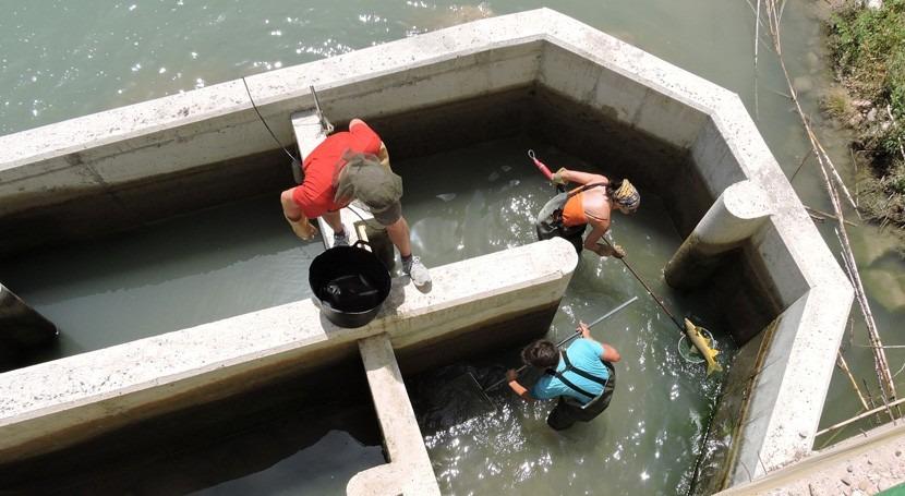Más 3.000 peces han utilizado ya escalas construidas conectar río Segura