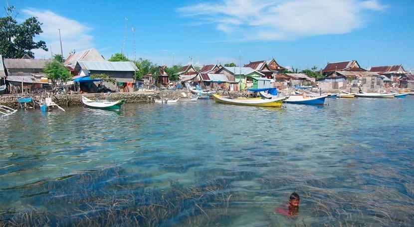 praderas marinas disminuyen bacterias presentes agua