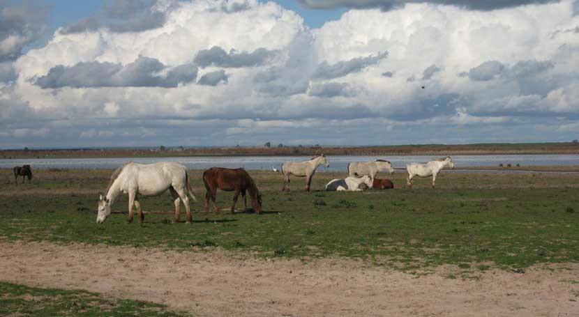 Este año, primavera Doñana será silenciosa