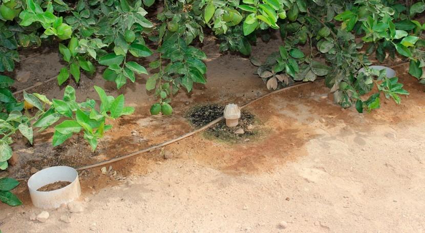 """Irriman"", busca manejo eficiente agua riego agricultura sostenible"