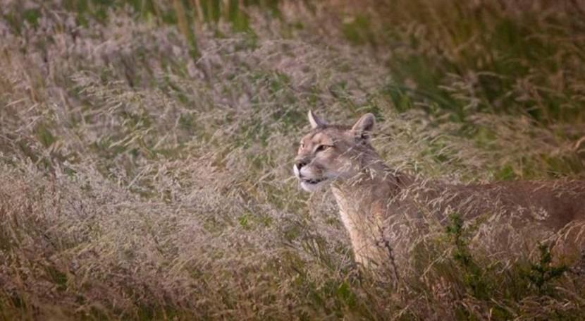 danés representación lengua  La sequía, una de las principales razones del desplazamiento animal | iAgua