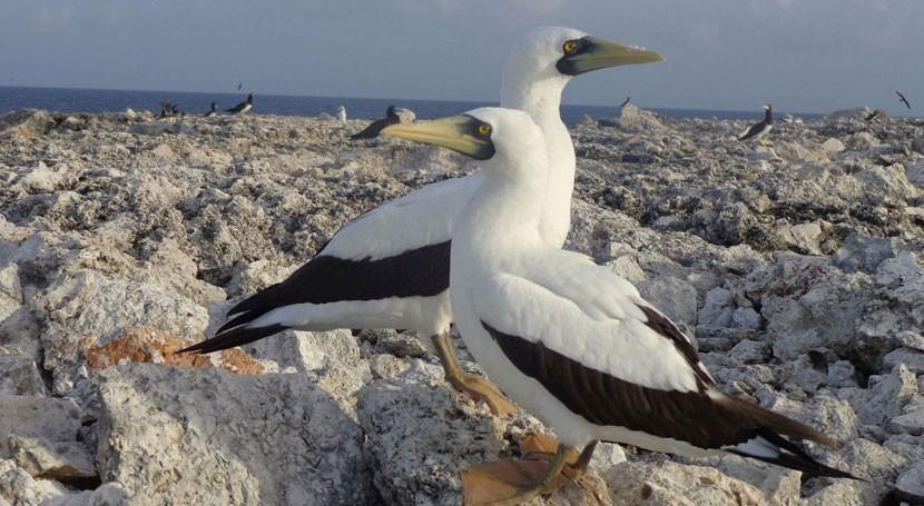 Reino Unido designa primer sitio Ramsar Anguila Isla Sombrero