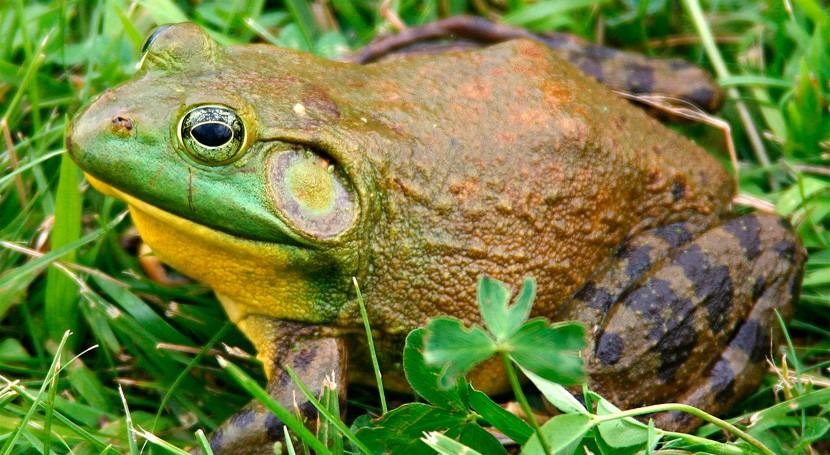 Comisión Europea reclama acciones 37 especies invasoras identificadas UE