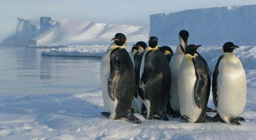 hielo Antártida bate récord mínimo extensión 1997