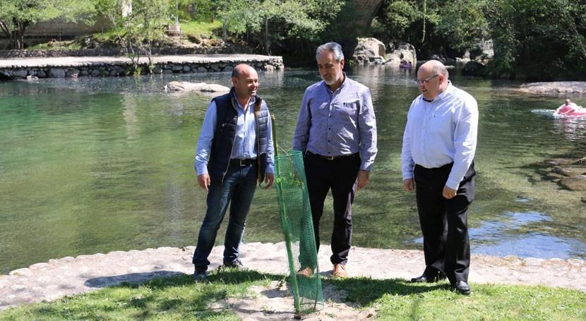 Avanzan trabajos recuperación bosque ribera río Tea Galicia