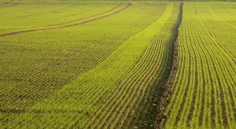 Drainuse: ¿Cómo reducir contaminación suelos y acuíferos drenajes cultivos?