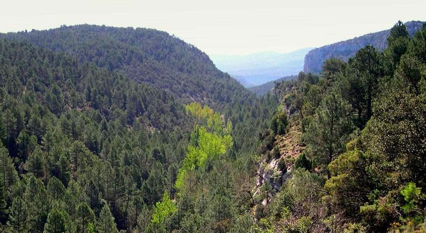 ¿Corre riesgo desaparecer paisaje agroforestal mediterráneo?