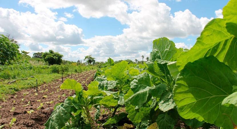 CHG otorga concesiones agua riegos Condado próximos 20 años